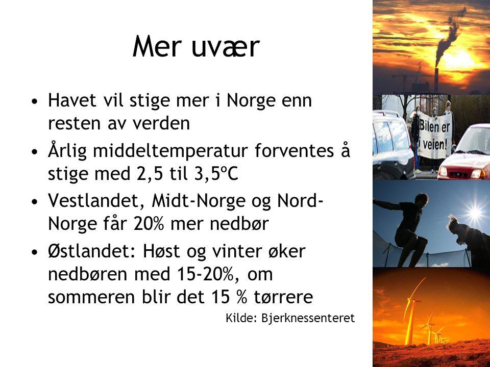Mer uvær Havet vil stige mer i Norge enn resten av verden Årlig middeltemperatur forventes å stige med 2,5 til 3,5ºC Vestlandet, Midt-Norge og Nord- Norge får 20% mer nedbør Østlandet: Høst og vinter øker nedbøren med 15-20%, om sommeren blir det 15 % tørrere Kilde: Bjerknessenteret