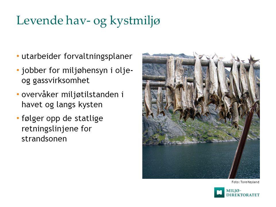 Livskraftige elver og innsjøer  leder arbeidet etter vannforskriften  regulerer utslipp og følger opp forurensning i ferskvann  kalker elver og innsjøer på grunn av sur nedbør  forvalter villaks og innlandsfisk Foto Tore Høyland