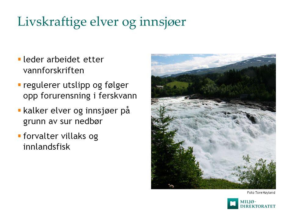 Livskraftige elver og innsjøer  leder arbeidet etter vannforskriften  regulerer utslipp og følger opp forurensning i ferskvann  kalker elver og inn