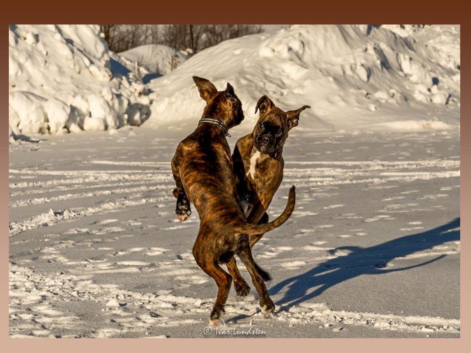 Bortsett fra hunden lydighet trening metoden, det finnes flere andre typer treningsmetoder; som for eksempel atferdstrening, kasse trening, agility trening, markør trening, ros trening, tvang trening, luring trening, verdifull trening, og så videre; det er en stor liste.