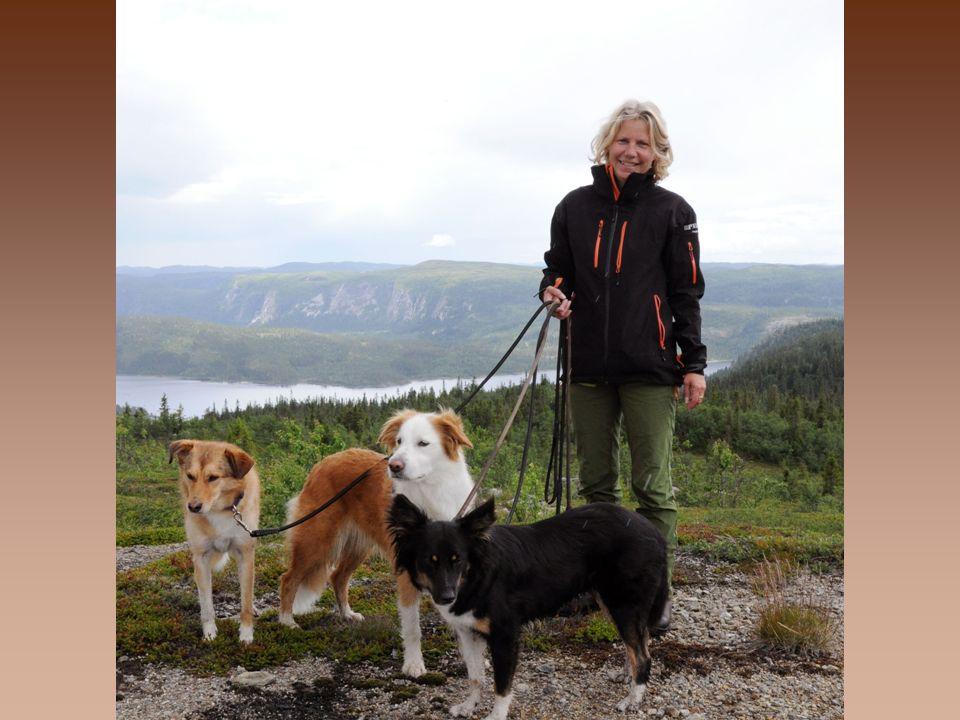 Norges Hundetrenerforbund AS har kategorisert sine kurs i to hovedkategorier.