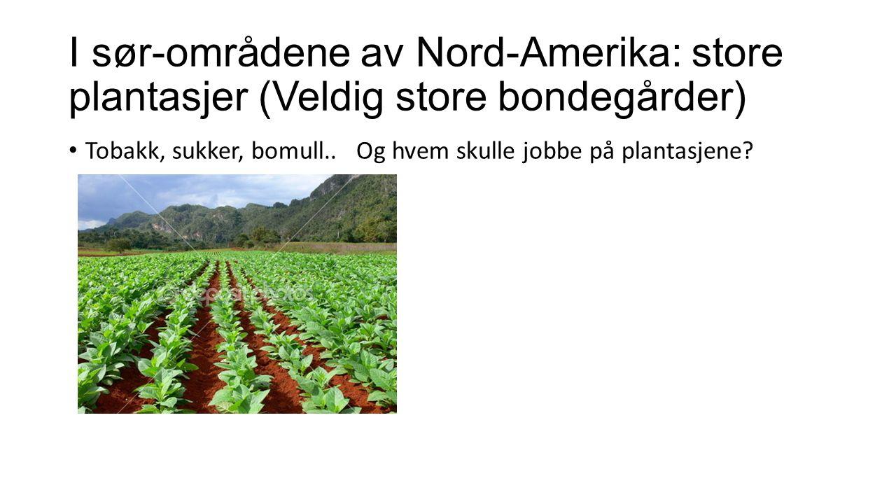 I sør-områdene av Nord-Amerika: store plantasjer (Veldig store bondegårder) Tobakk, sukker, bomull..