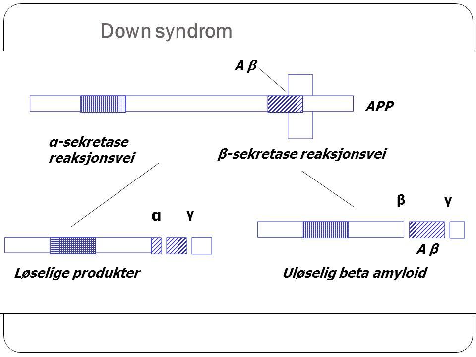 A β β-sekretase reaksjonsvei Uløselig beta amyloid APP β Løselige produkter α γ α-sekretase reaksjonsvei A β γ Down syndrom