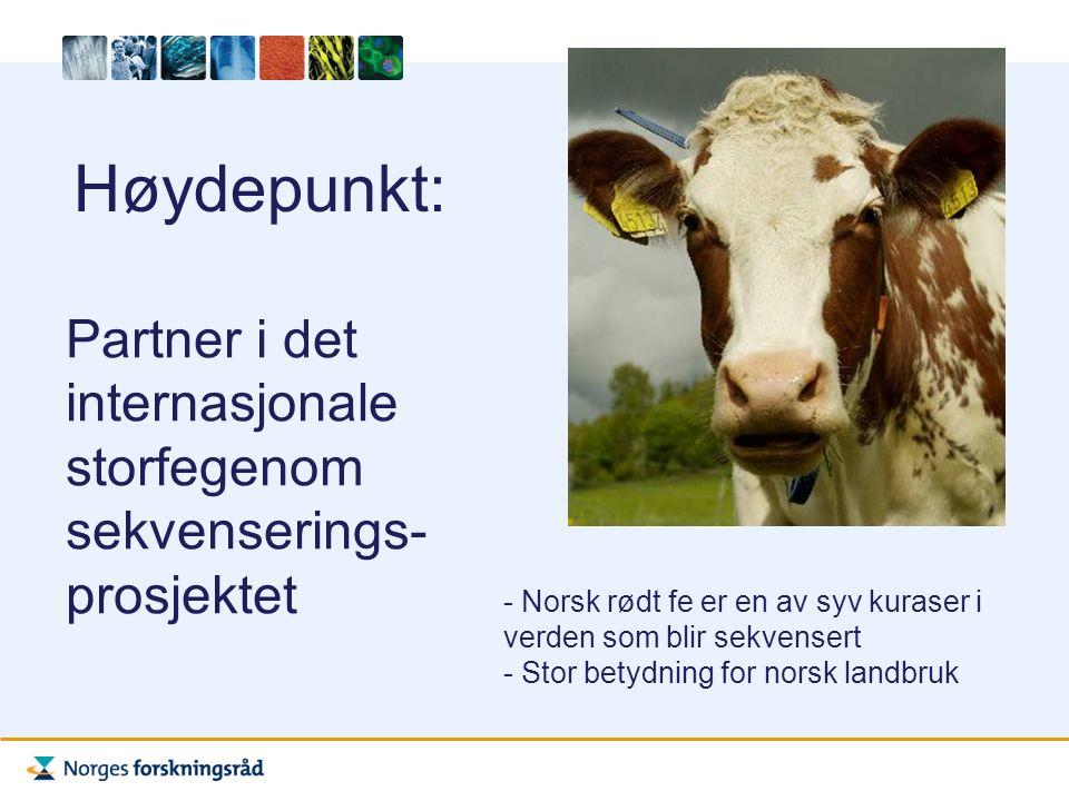 Høydepunkt: Partner i det internasjonale storfegenom sekvenserings- prosjektet - Norsk rødt fe er en av syv kuraser i verden som blir sekvensert - Stor betydning for norsk landbruk