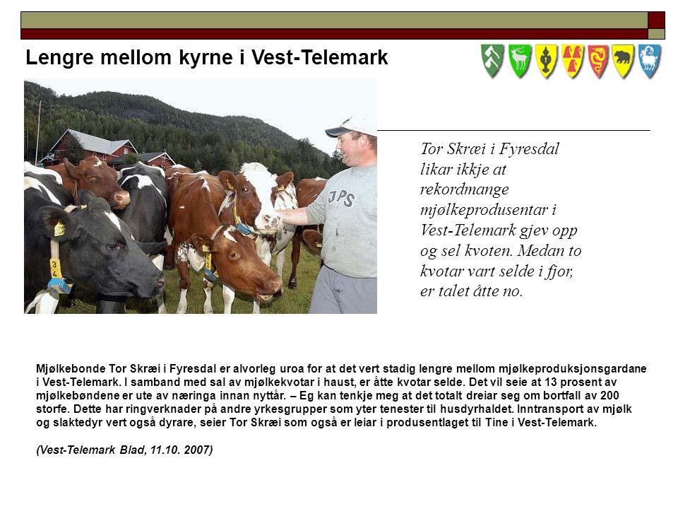 Lengre mellom kyrne i Vest-Telemark Tor Skræi i Fyresdal likar ikkje at rekordmange mjølkeprodusentar i Vest-Telemark gjev opp og sel kvoten.