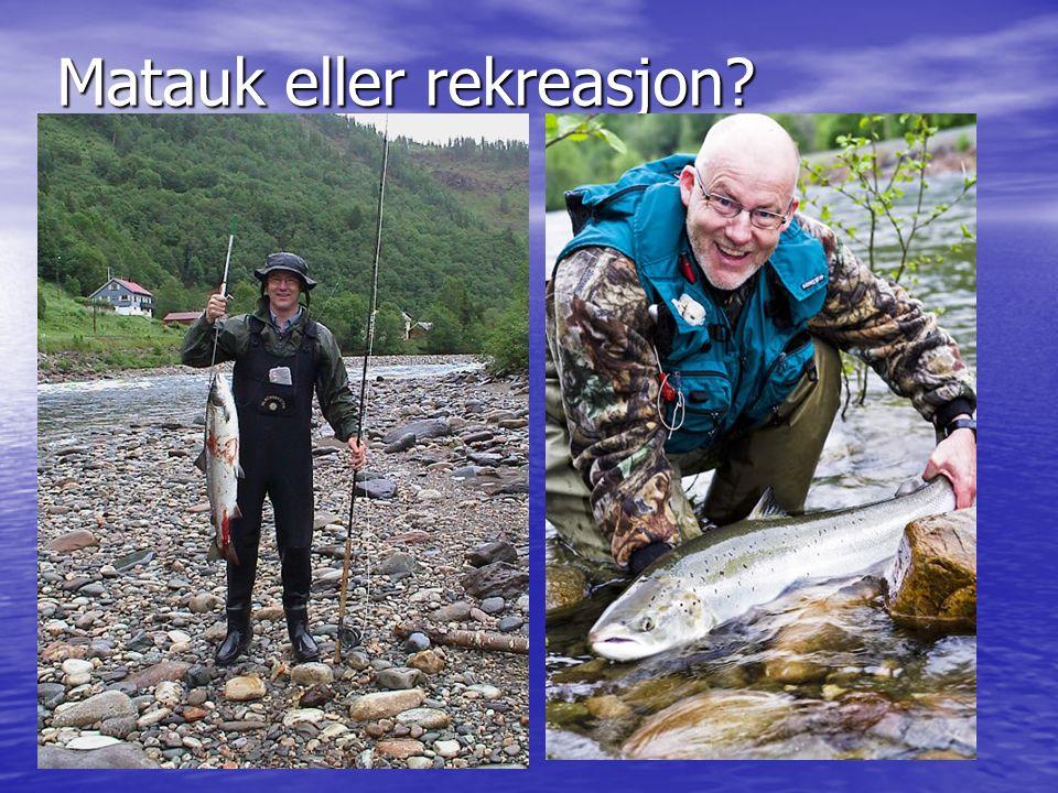 Matauk eller rekreasjon