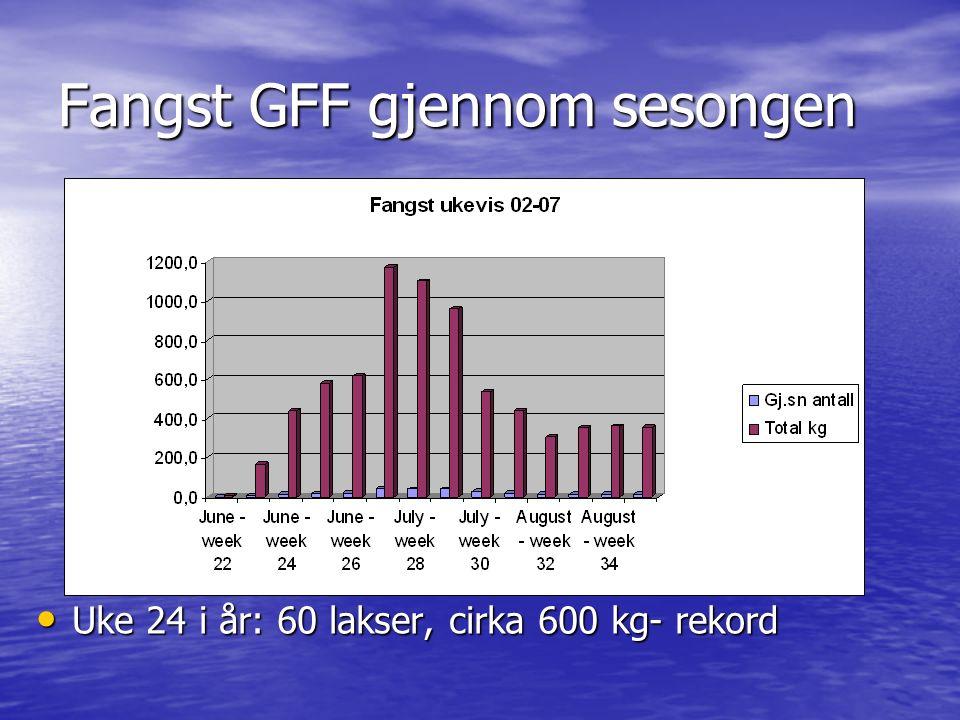 Fangst GFF gjennom sesongen Uke 24 i år: 60 lakser, cirka 600 kg- rekord Uke 24 i år: 60 lakser, cirka 600 kg- rekord