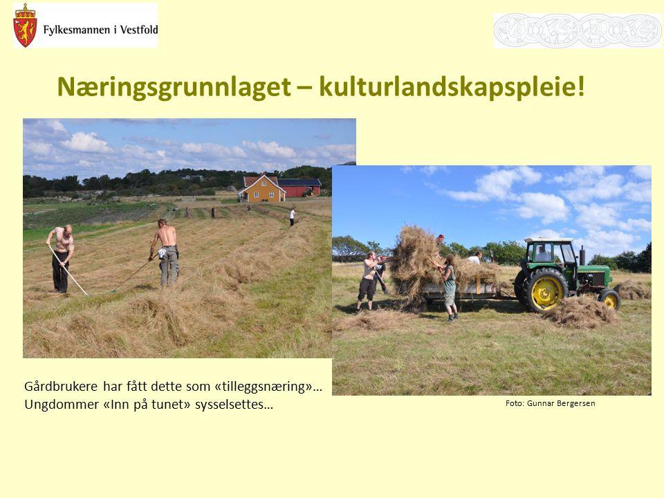 Næringsgrunnlaget – kulturlandskapspleie! Gårdbrukere har fått dette som «tilleggsnæring»… Ungdommer «Inn på tunet» sysselsettes… Foto: Gunnar Bergers