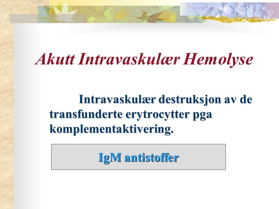 Akutt Intravaskulær Hemolyse Intravaskulær destruksjon av de transfunderte erytrocytter pga komplementaktivering. Intravaskulær destruksjon av de tran