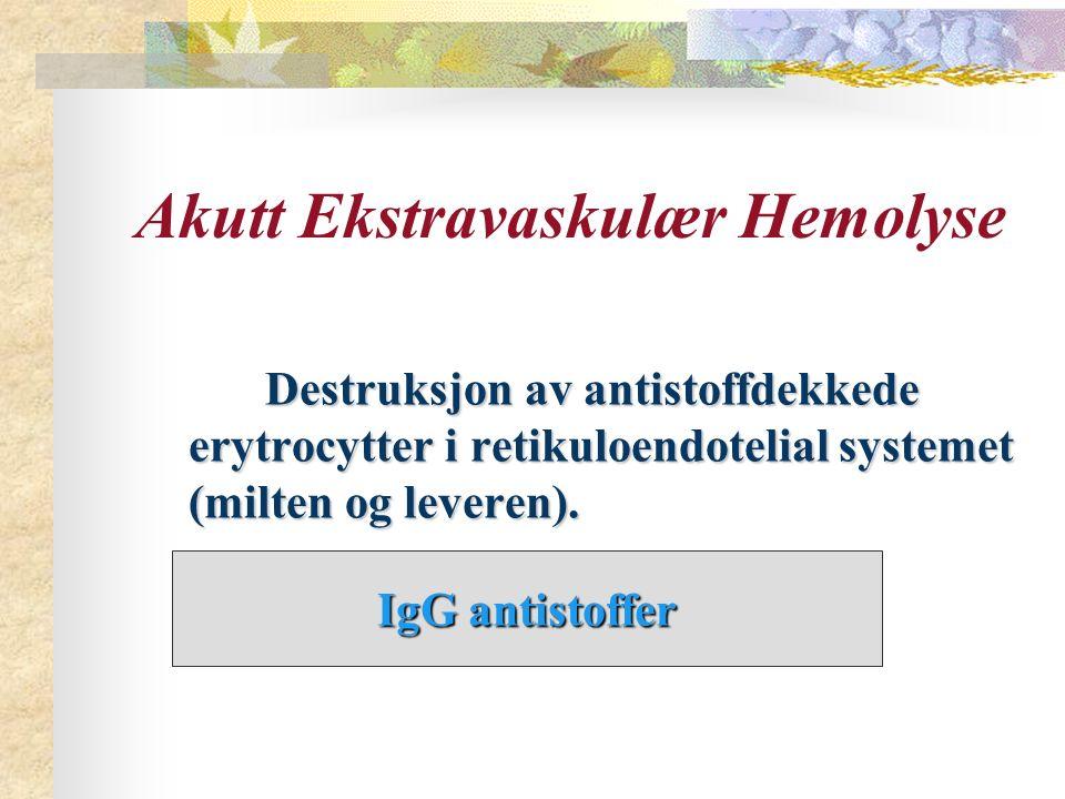 Akutt Ekstravaskulær Hemolyse Destruksjon av antistoffdekkede erytrocytter i retikuloendotelial systemet (milten og leveren). Destruksjon av antistoff