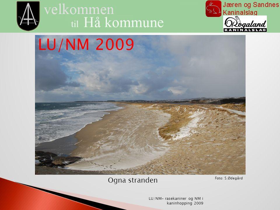 Ogna stranden Foto: S.Ødegård LU/NM- rasekaniner og NM i kaninhopping 2009 LU/NM 2009