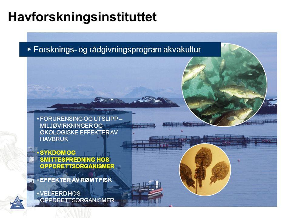 ▶ Forsknings- og rådgivningsprogram akvakultur FORURENSING OG UTSLIPP – MILJØVIRKNINGER OG ØKOLOGISKE EFFEKTER AV HAVBRUK SYKDOM OG SMITTESPREDNING HOS OPPDRETTSORGANISMER EFFEKTER AV RØMT FISK VELFERD HOS OPPDRETTSORGANISMER Havforskningsinstituttet