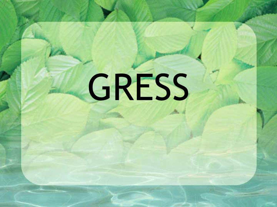 ULIKE GRESSARTER De viktigste plantene på kunstengene er timotei og rødkløver.