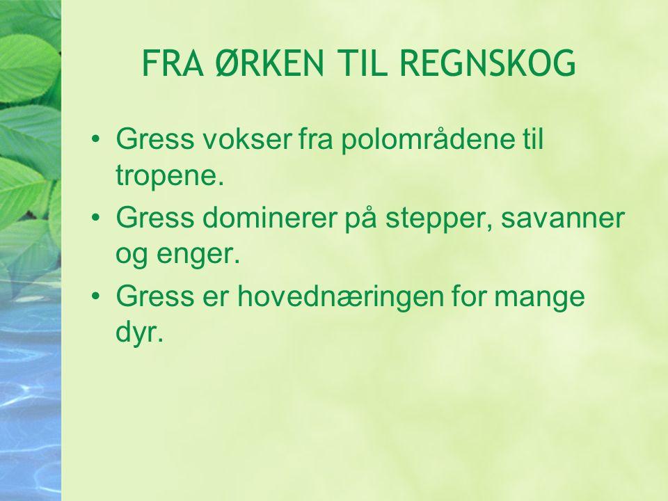 FRA ØRKEN TIL REGNSKOG Gress vokser fra polområdene til tropene.