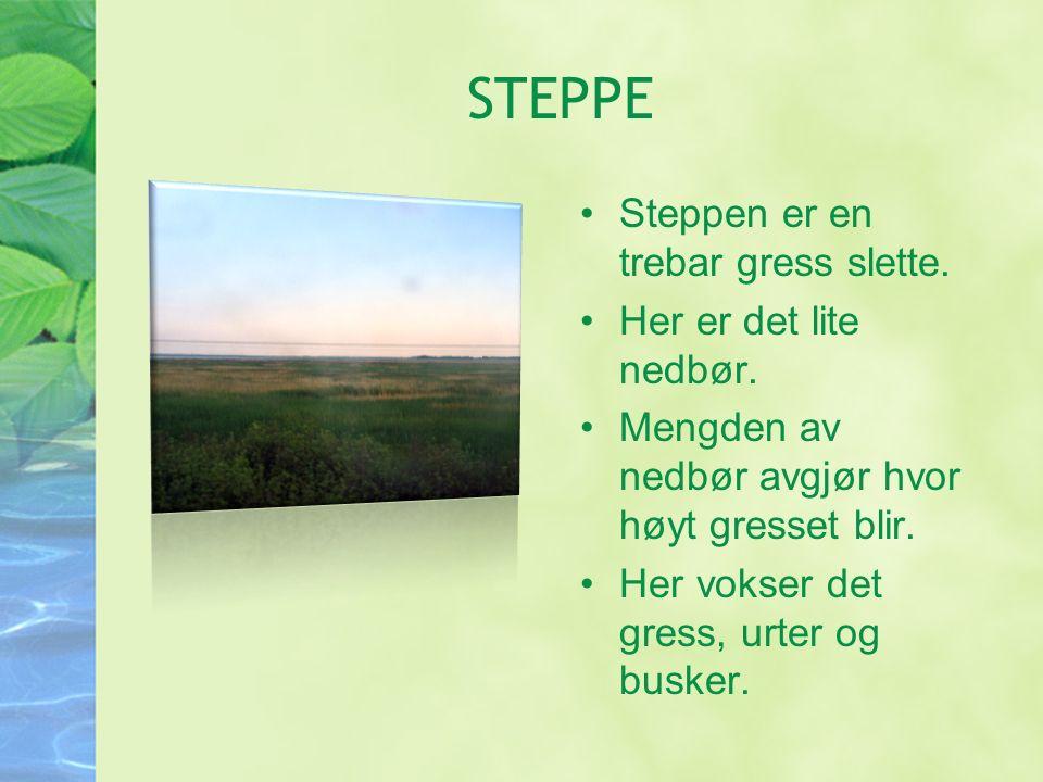 STEPPE Steppen er en trebar gress slette. Her er det lite nedbør.