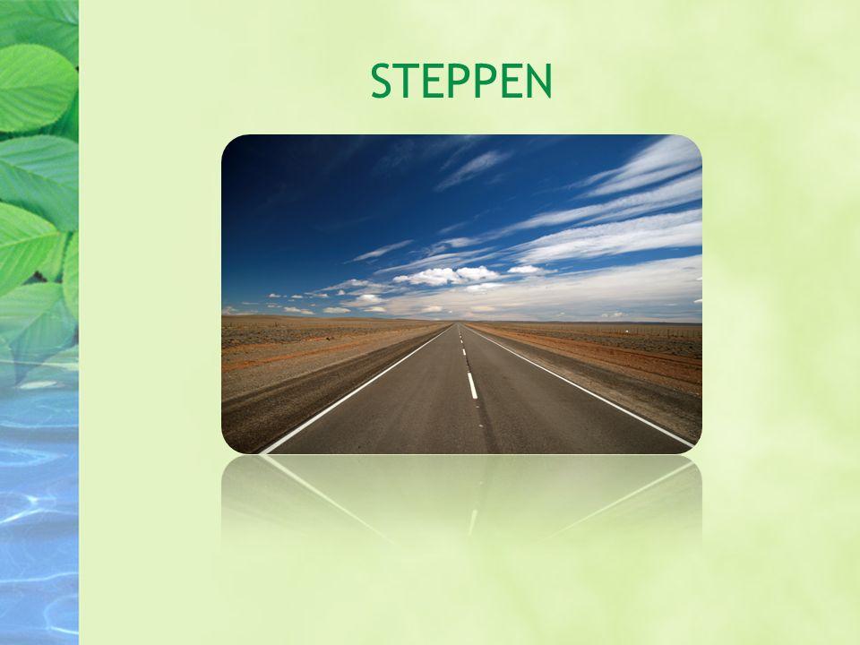 Steppe betegner den typen gress sletter som finnes i områder med liten nedbør.