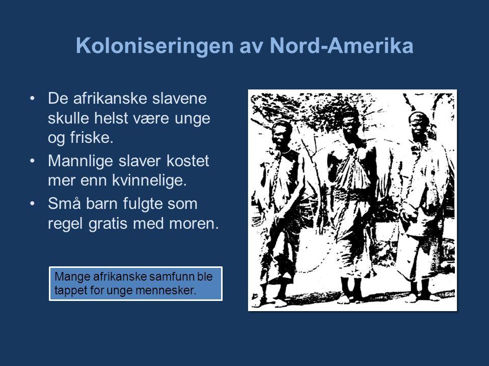 Koloniseringen av Nord-Amerika De afrikanske slavene skulle helst være unge og friske.