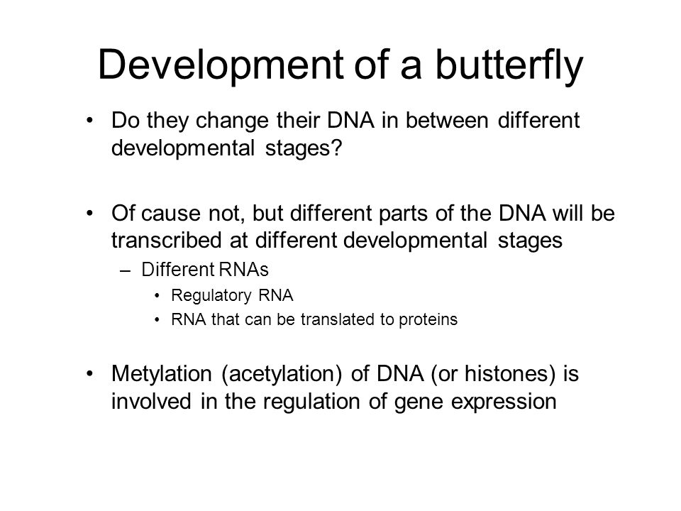 Development of a butterfly Do they change their DNA in between different developmental stages.