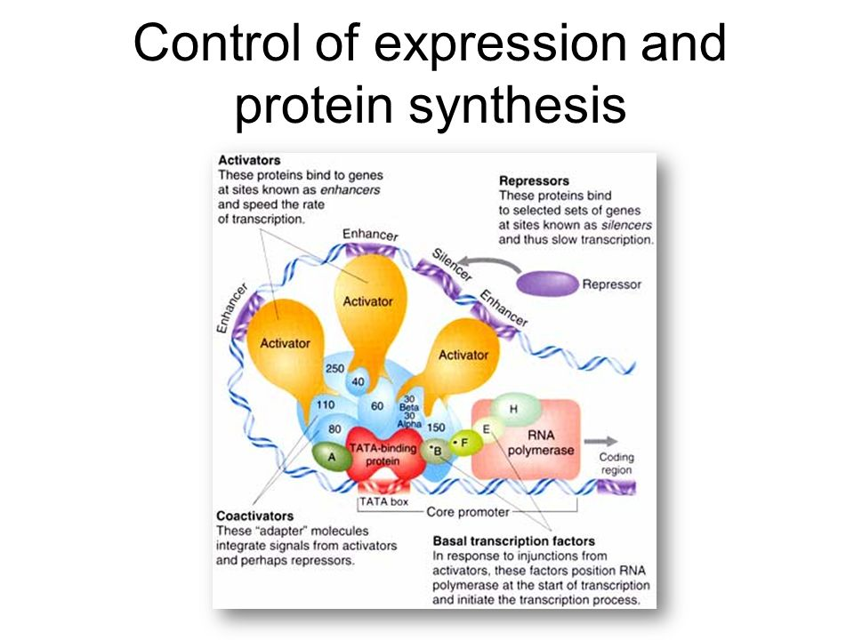 Control of expression and protein synthesis