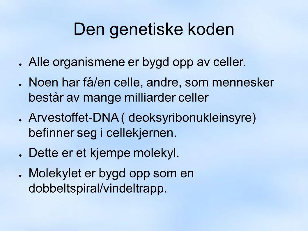 Den genetiske koden ● Alle organismene er bygd opp av celler.