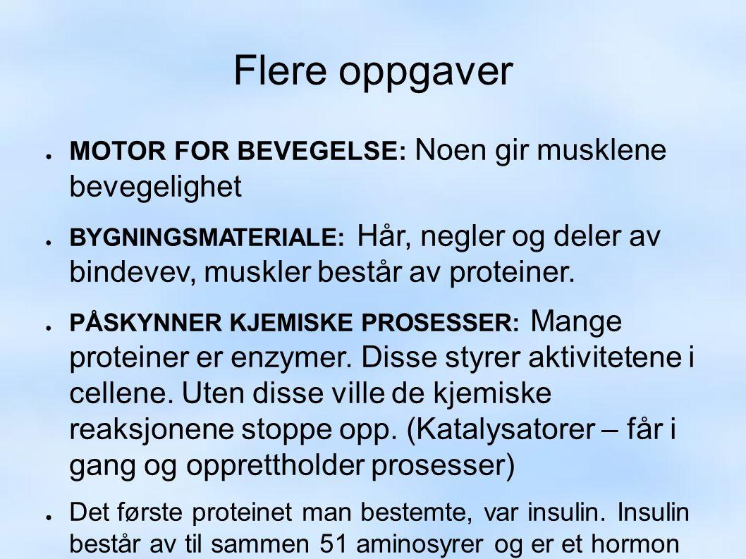 Flere oppgaver ● MOTOR FOR BEVEGELSE: Noen gir musklene bevegelighet ● BYGNINGSMATERIALE: Hår, negler og deler av bindevev, muskler består av proteiner.