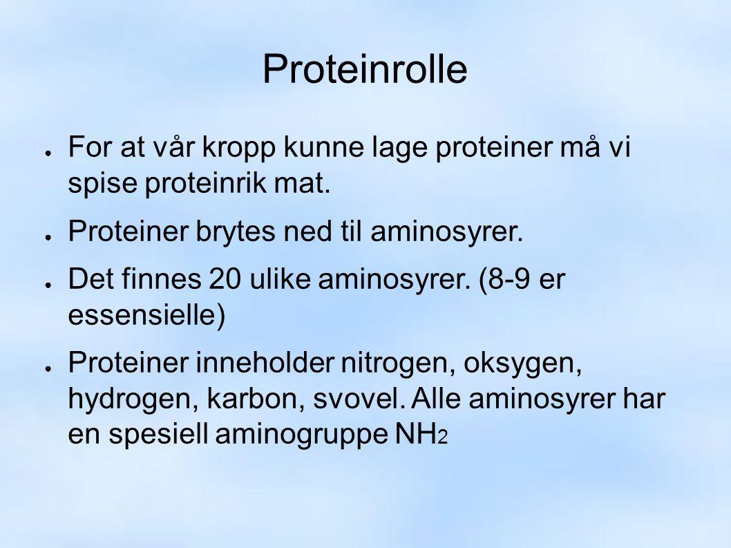 Proteinrolle ● For at vår kropp kunne lage proteiner må vi spise proteinrik mat.