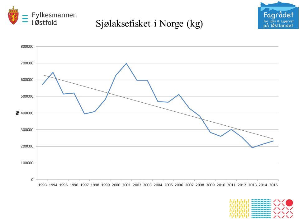Sjølaksefisket i Norge (kg)