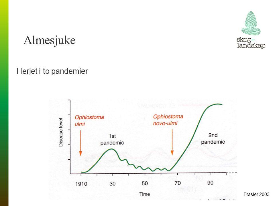 Herjet i to pandemier Almesjuke Brasier 2003