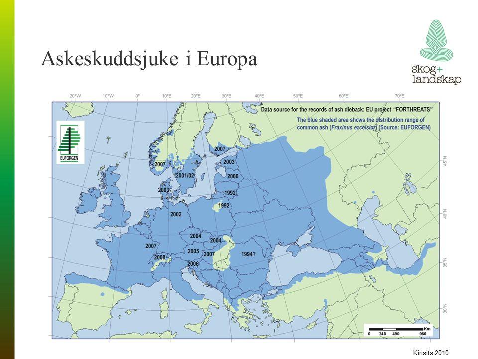 Askeskuddsjuke i Europa Kirisits 2010