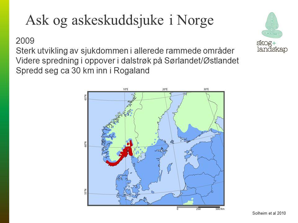 Ask og askeskuddsjuke i Norge 2009 Sterk utvikling av sjukdommen i allerede rammede områder Videre spredning i oppover i dalstrøk på Sørlandet/Østlandet Spredd seg ca 30 km inn i Rogaland Solheim et al 2010
