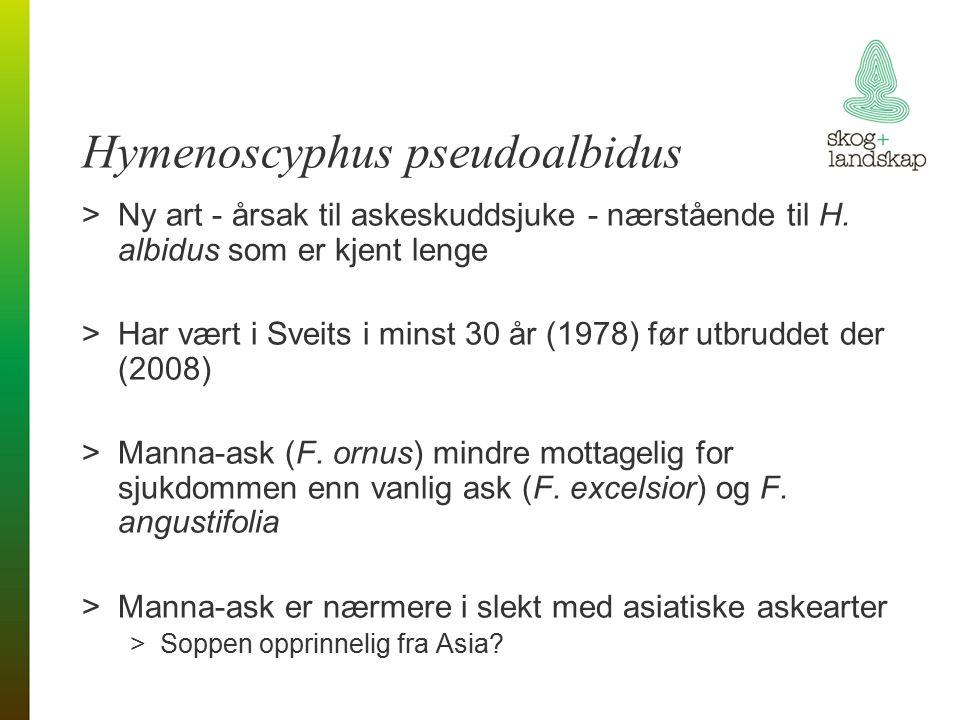 Hymenoscyphus pseudoalbidus >Ny art - årsak til askeskuddsjuke - nærstående til H.