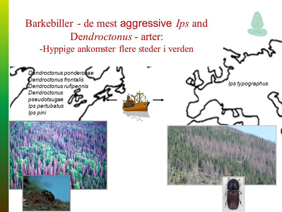 Ips typographus Barkebiller - de mest aggressive Ips and Dendroctonus - arter: -Hyppige ankomster flere steder i verden Dendroctonus ponderosae Dendroctonus frontalis Dendroctonus rufipennis Dendroctonus pseudotsugae Ips pertubatus Ips pini