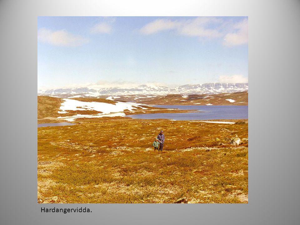 Hardangervidda.