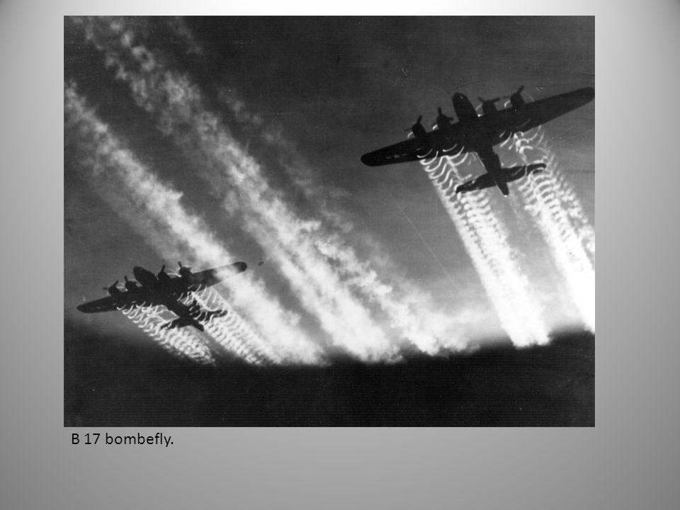 B 17 bombefly.