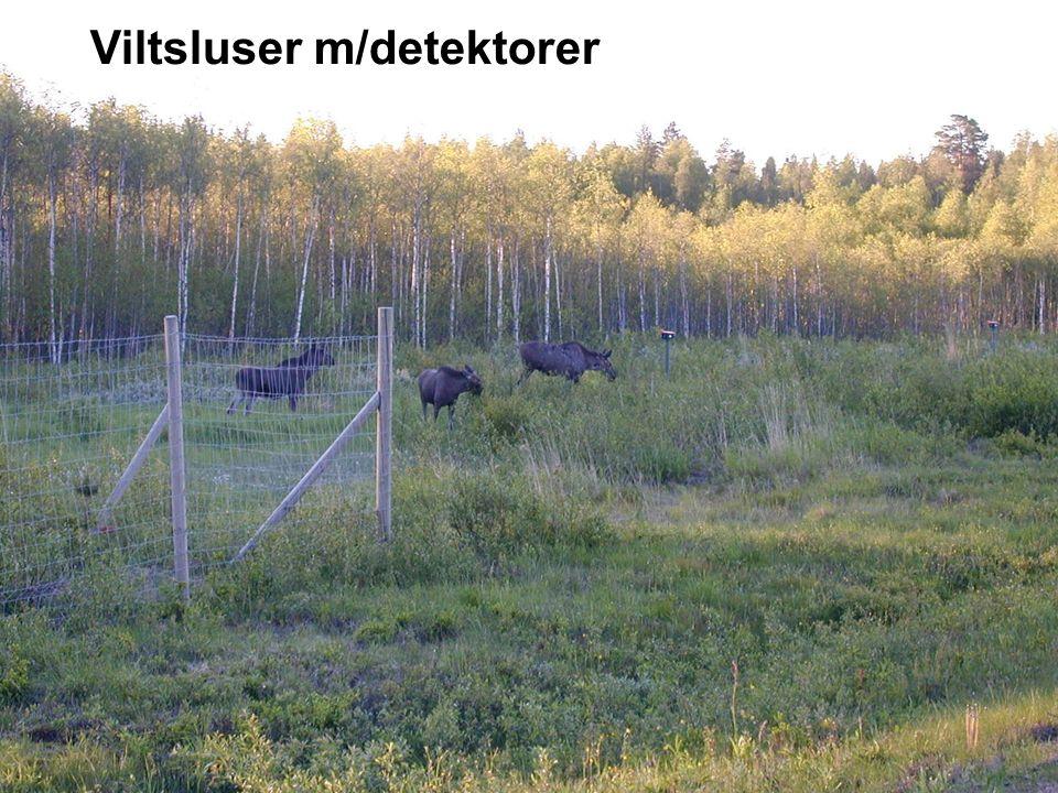 Viltsluser m/detektorer