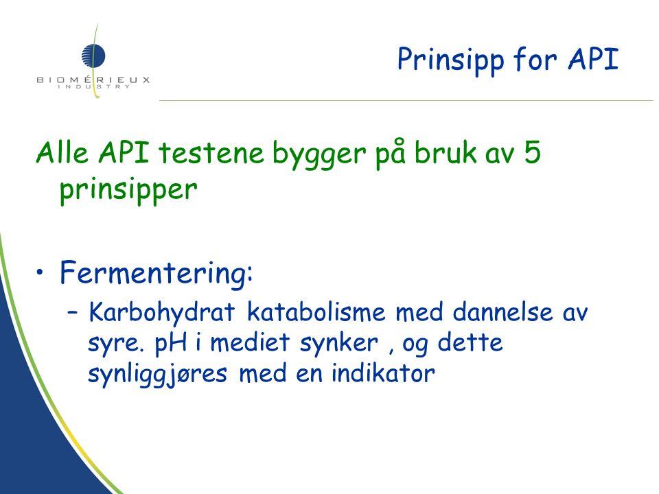 Prinsipp for API