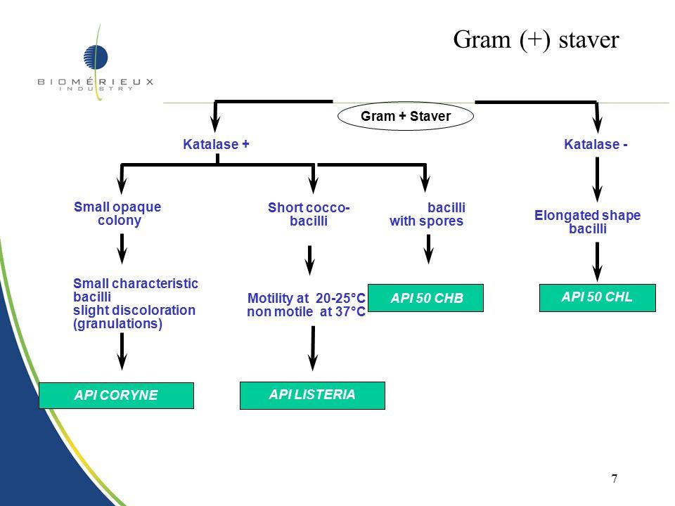 6 Gram negative staver Reading after 24hrs of incubation Gram (-) Staver Lactose -Lactose + Oxidase + API 20 N E Oxidase - API 20 E