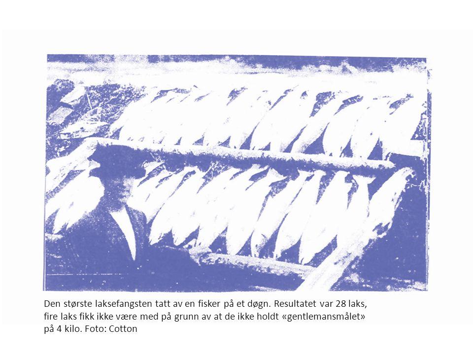 Den største laksefangsten tatt av en fisker på et døgn.