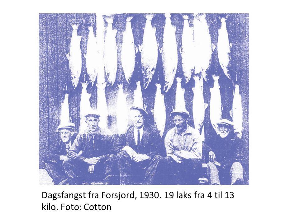 Dagsfangst fra Forsjord, 1930. 19 laks fra 4 til 13 kilo. Foto: Cotton