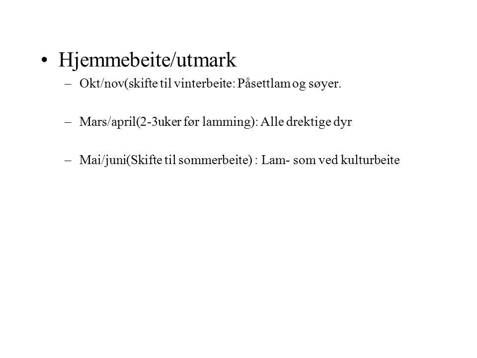 Hjemmebeite/utmark –Okt/nov(skifte til vinterbeite: Påsettlam og søyer. –Mars/april(2-3uker før lamming): Alle drektige dyr –Mai/juni(Skifte til somme