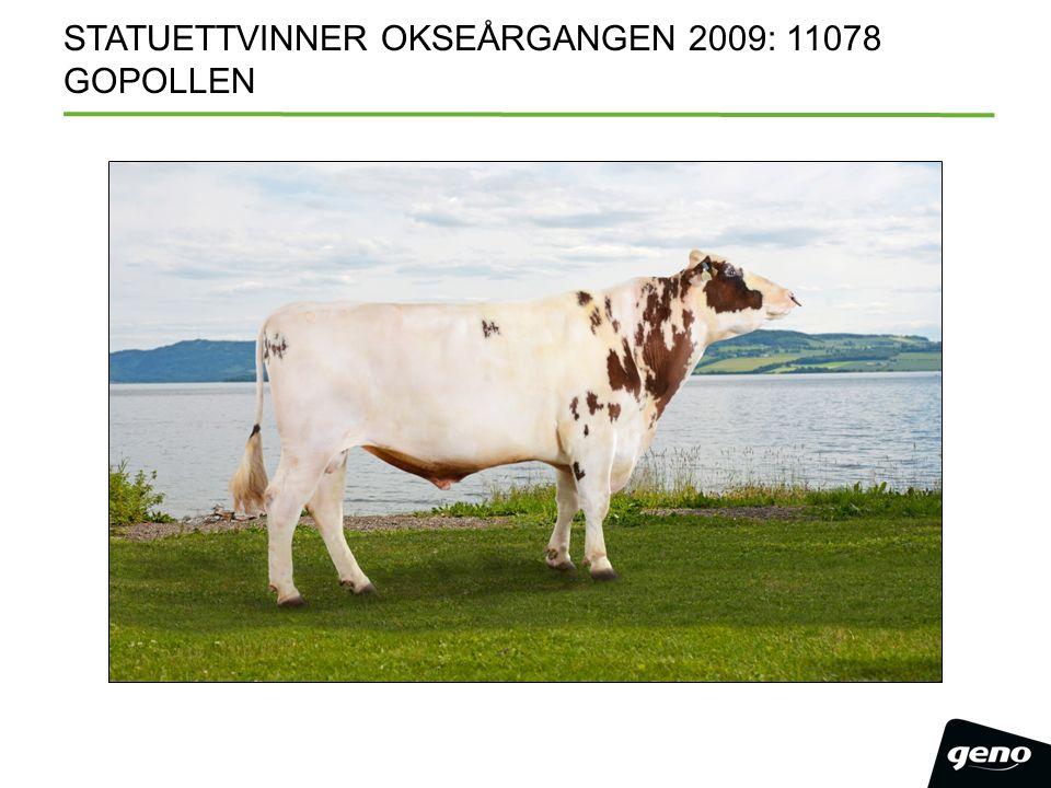 STATUETTVINNER OKSEÅRGANGEN 2009: 11078 GOPOLLEN