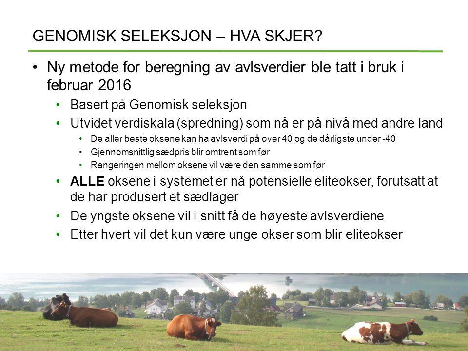 GENOMISK SELEKSJON – HVA SKJER.