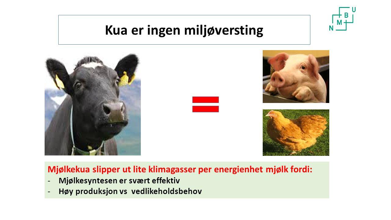 Kua er ingen miljøversting Mjølkekua slipper ut lite klimagasser per energienhet mjølk fordi: -Mjølkesyntesen er svært effektiv -Høy produksjon vs vedlikeholdsbehov