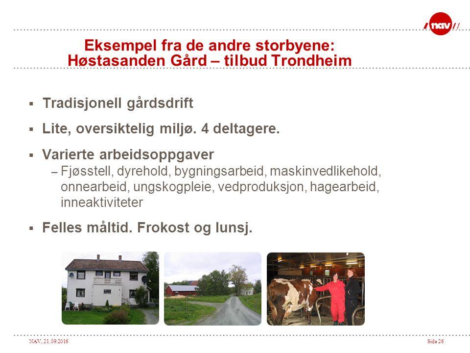 NAV, 21.09.2016Side 26 Eksempel fra de andre storbyene: Høstasanden Gård – tilbud Trondheim  Tradisjonell gårdsdrift  Lite, oversiktelig miljø.
