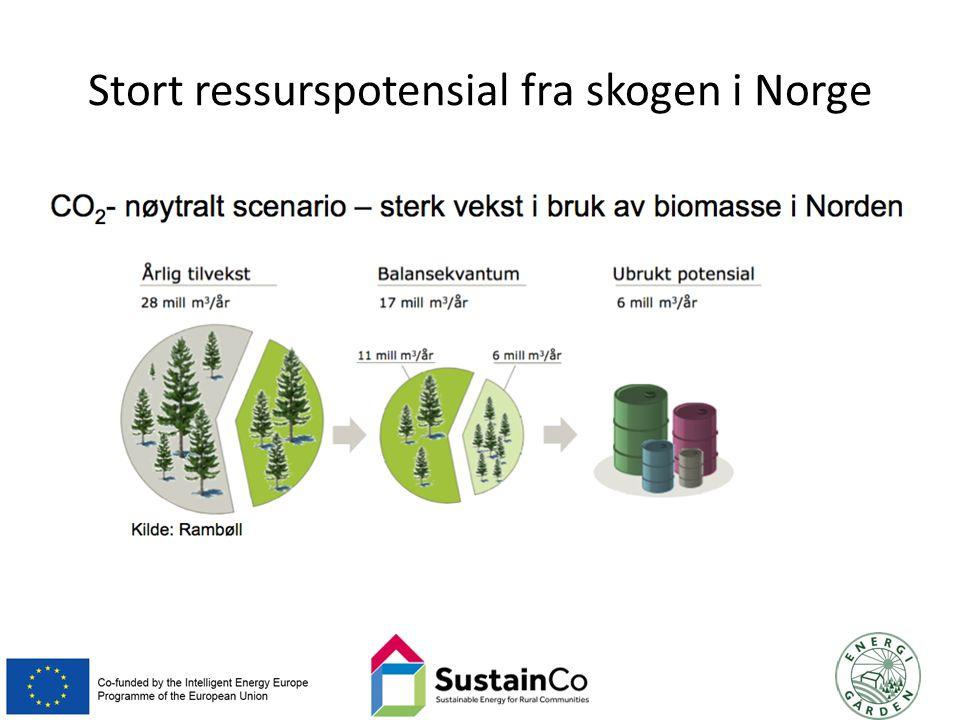Stort ressurspotensial fra skogen i Norge