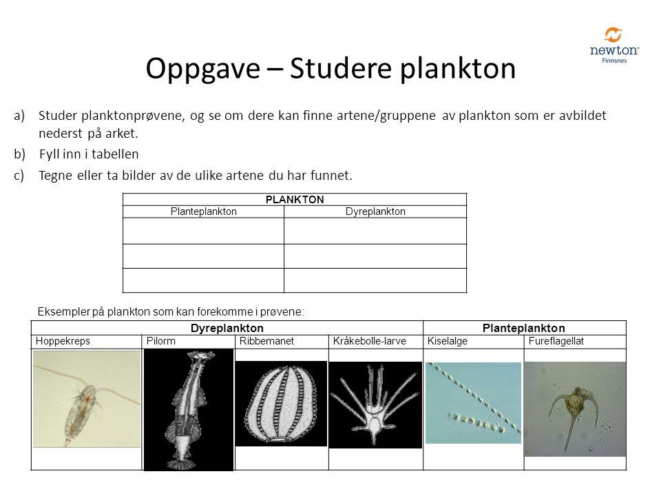 a)Studer planktonprøvene, og se om dere kan finne artene/gruppene av plankton som er avbildet nederst på arket. b) Fyll inn i tabellen c)Tegne eller t
