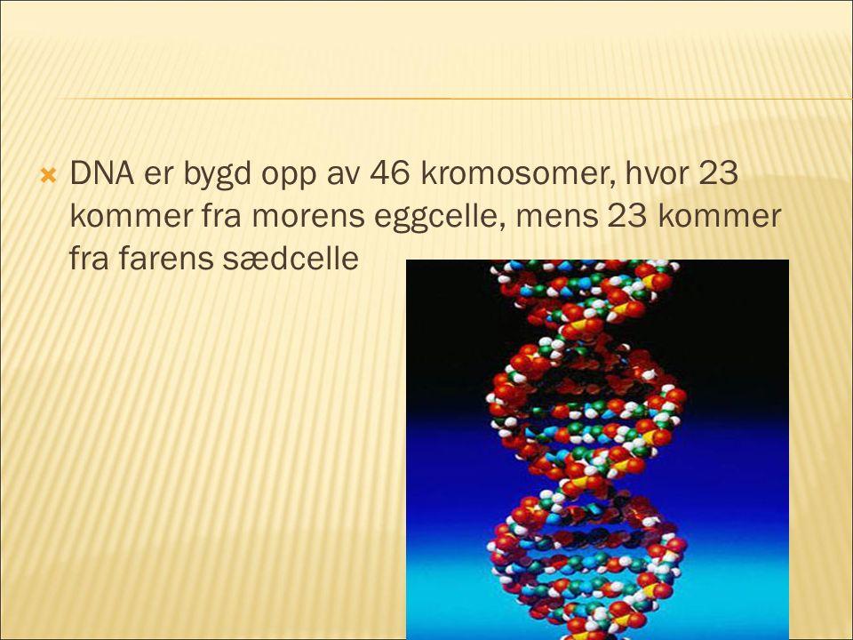 DNA er bygd opp av 46 kromosomer, hvor 23 kommer fra morens eggcelle, mens 23 kommer fra farens sædcelle