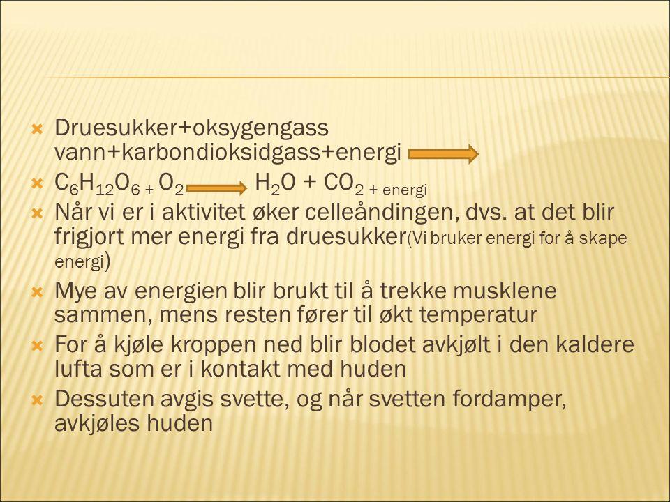  Druesukker+oksygengass vann+karbondioksidgass+energi  C 6 H 12 O 6 + O 2 H 2 O + CO 2 + energi  Når vi er i aktivitet øker celleåndingen, dvs.