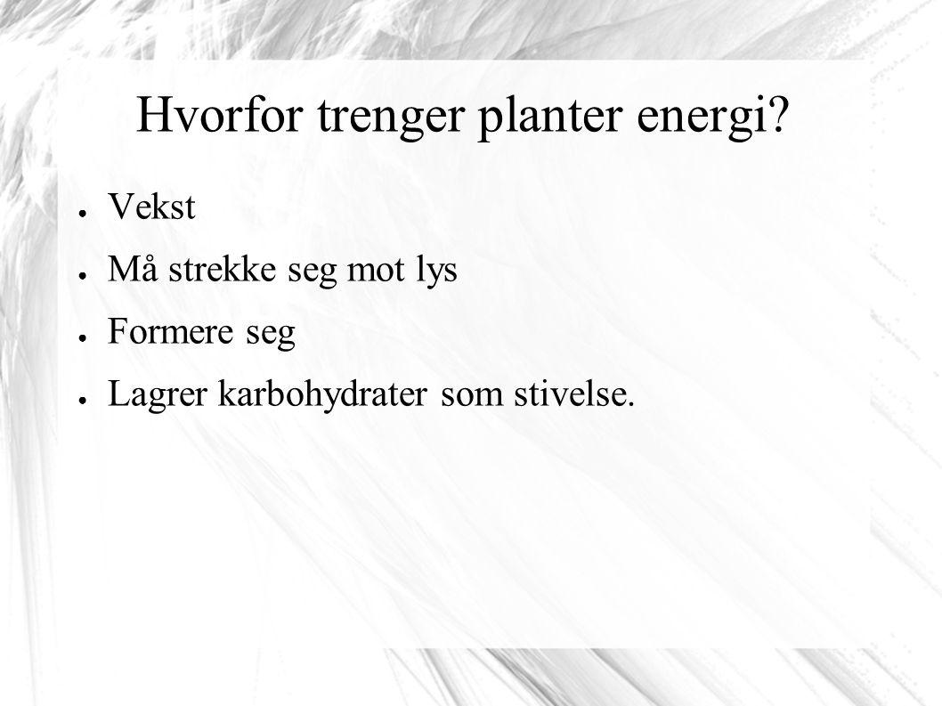 Hvorfor trenger planter energi.