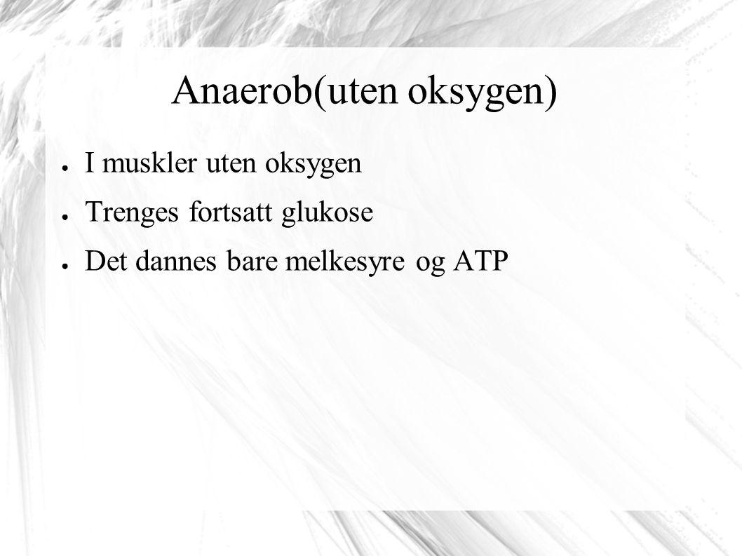 Anaerob(uten oksygen) ● I muskler uten oksygen ● Trenges fortsatt glukose ● Det dannes bare melkesyre og ATP